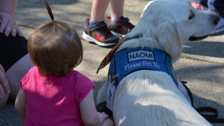 small child next to service dog